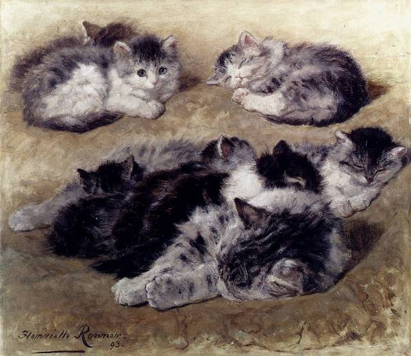 A Study Of Cats